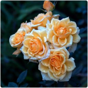 www.cemetery.org Flower #2