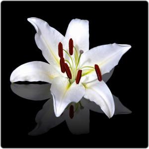 www.cemetery.org Flower #5