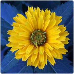 www.cemetery.org Flower #6