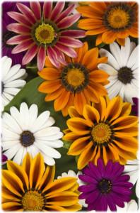 www.cemetery.org Flower #8